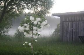 Juhannus-2011